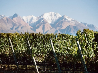 "Lorenzo Pasquini : ""Traduire Cheval Blanc sur le terroir argentin"""
