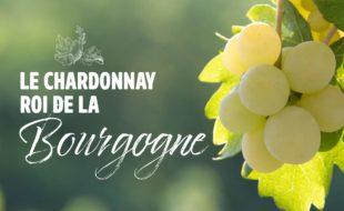 Cépage roi de la Bourgogne: le Chardonnay
