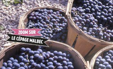 Le match du Malbec: plutôt Cahors, Argentine ou Côtes de Bourg?