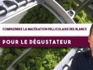Les clés pour comprendre la MACÉRATION PELLICULAIRE des BLANCS, pour le dégustateur (Leçon n°128)