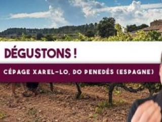 🍷Dégustons ensemble ! DO Penedés (Espagne), Pardas, Pur Xarel-Lo (Leçon n°133)