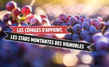 Les cépages d'appoint, les stars montantes des vignobles