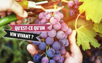 Qu'est-ce qu'un « vin vivant »?